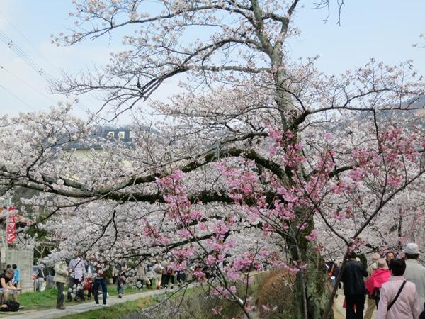 Kyoto : chemin des philosophes