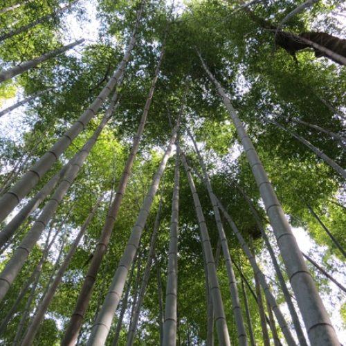 Kyoto – Arashiyama – 2012
