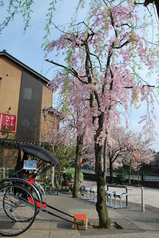 kanazawa-2016-higashi-chayagai-bord-de-rivière.2