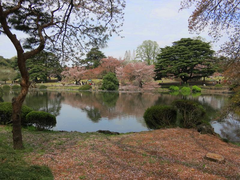 tokyo-gyoen-parc-cerisier-lac