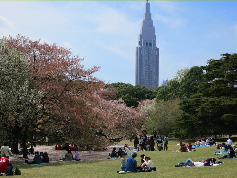 tokyo-gyoen-parc-hanami