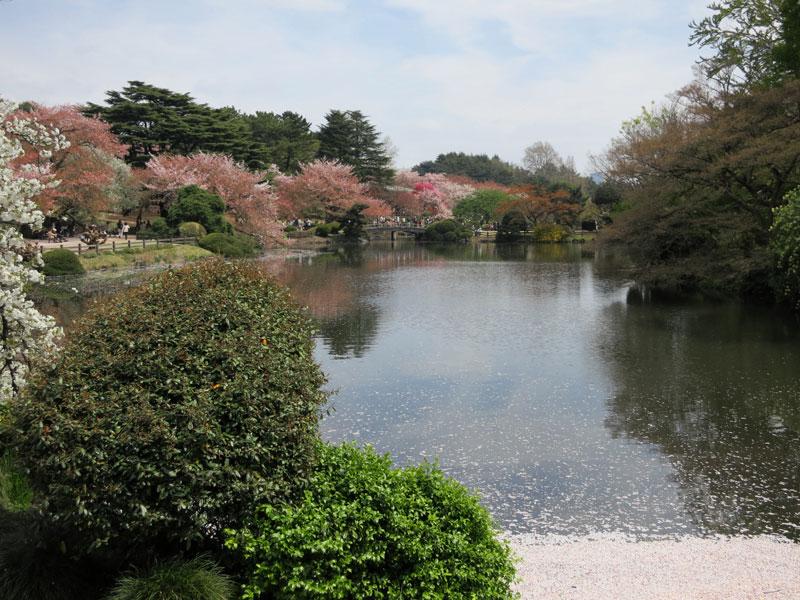 tokyo-gyoen-parc-lac