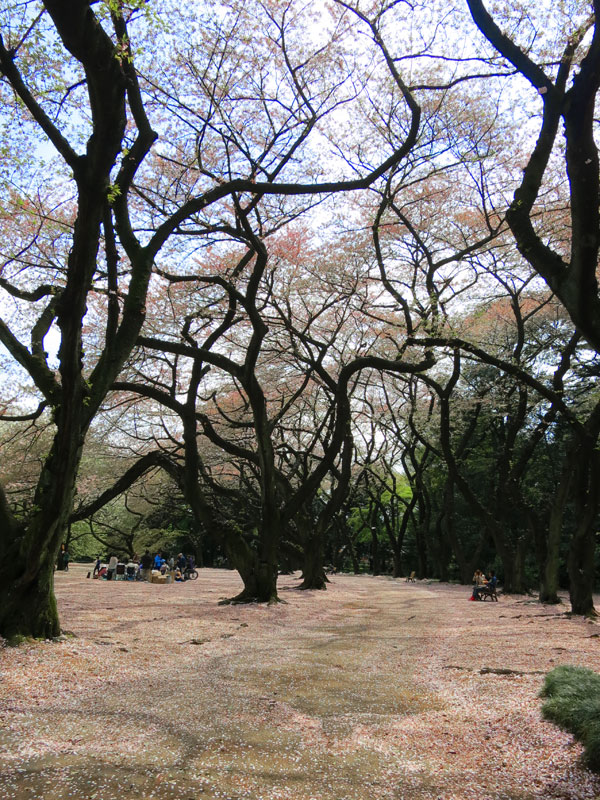 tokyo-gyoen-parc-petale-2