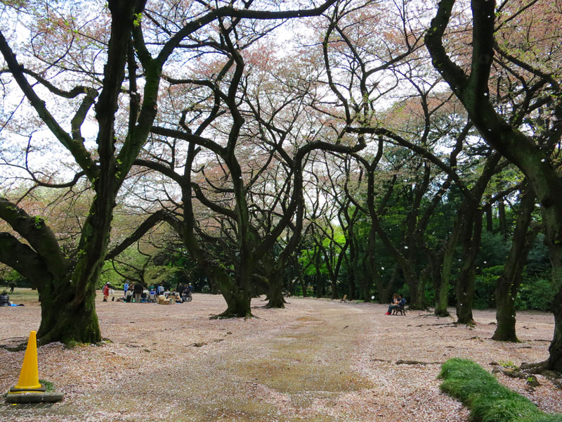tokyo-gyoen-parc-petale