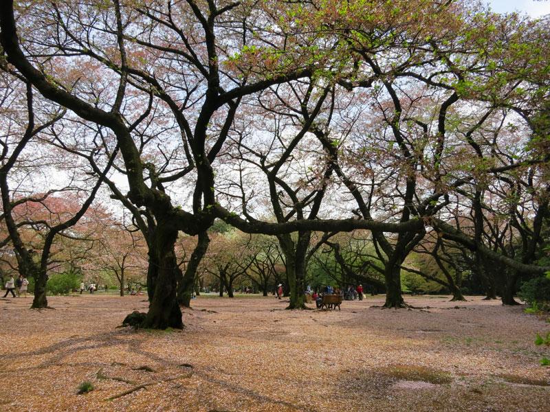 tokyo-gyoen-parc