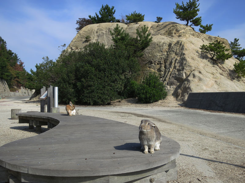 okunoshima-lapin-banc-rocher