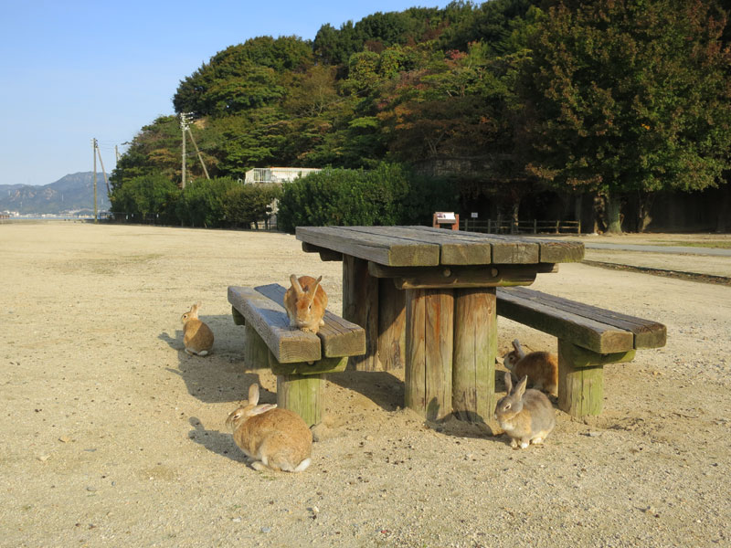okunoshima-lapins-table-picnic.