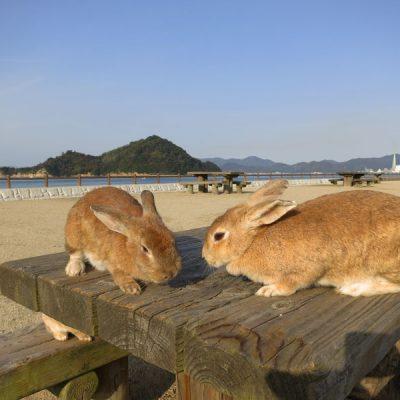 L'île aux lapins d'Okunoshima – 2017