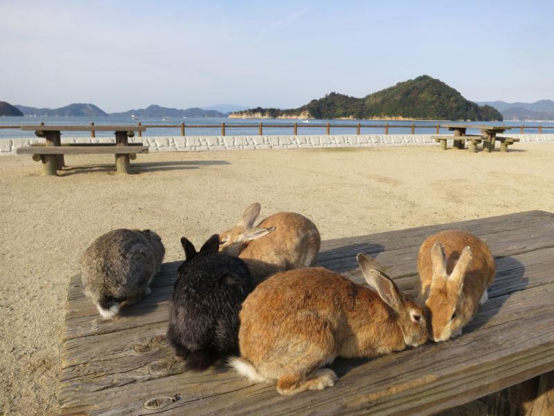 okunoshima-lapins-table-vue-mer