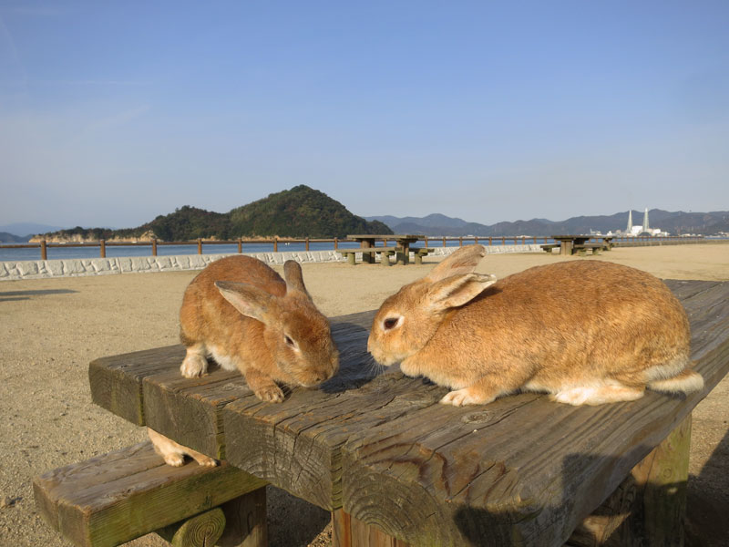 okunoshima-lapins-table-vue