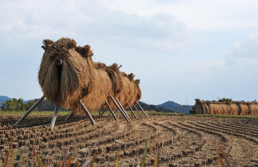 teshima-2017-teshima-art-museum-rice