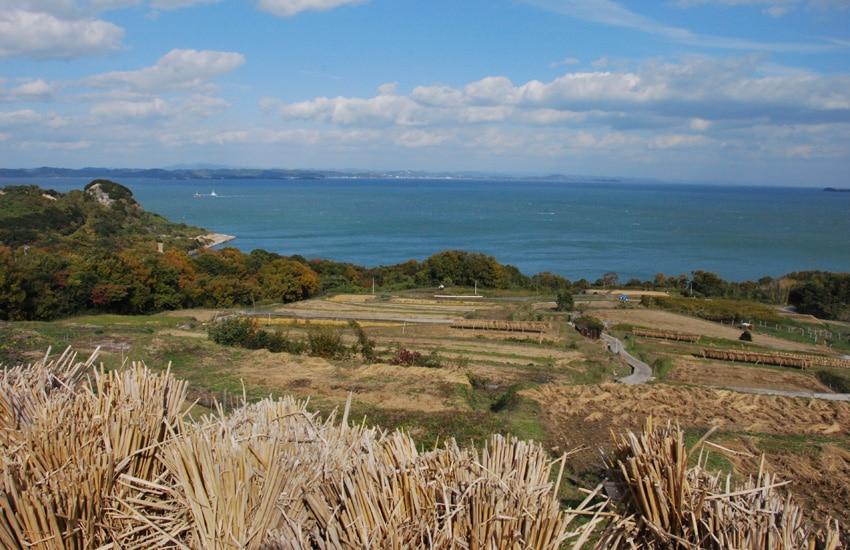 teshima-2017-rice-terrasse