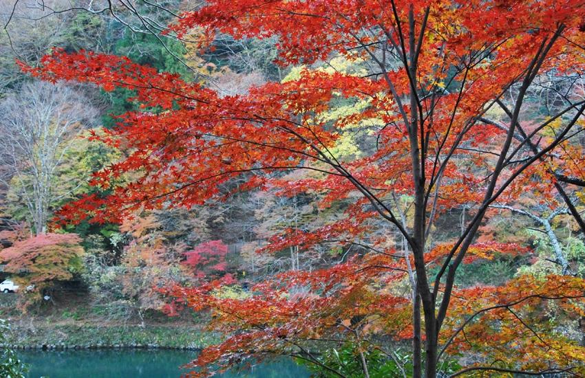 kyoto-2017-arashiyama