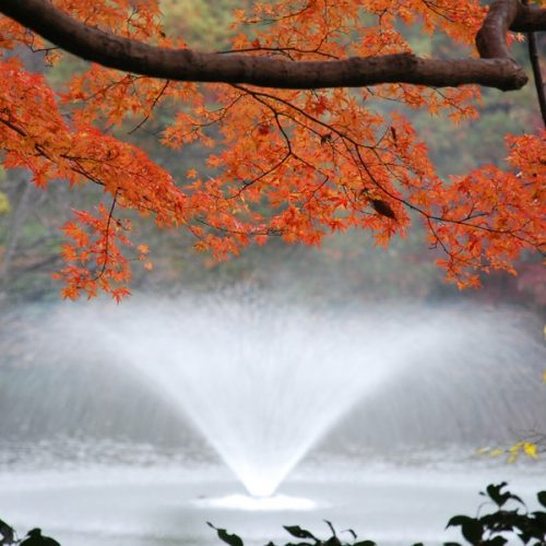 Tokyo 2017 – Jardin de Rikugien et Parc Inokashira