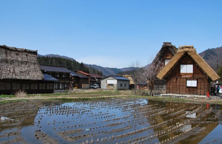 maison-riziere-shirakawago-2016