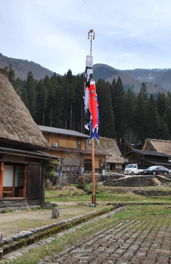 village-ogimachi-koi-2-shirakawago-2016