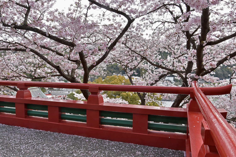 fukuoka-2019-yutoku-inari-honden-cerisiers