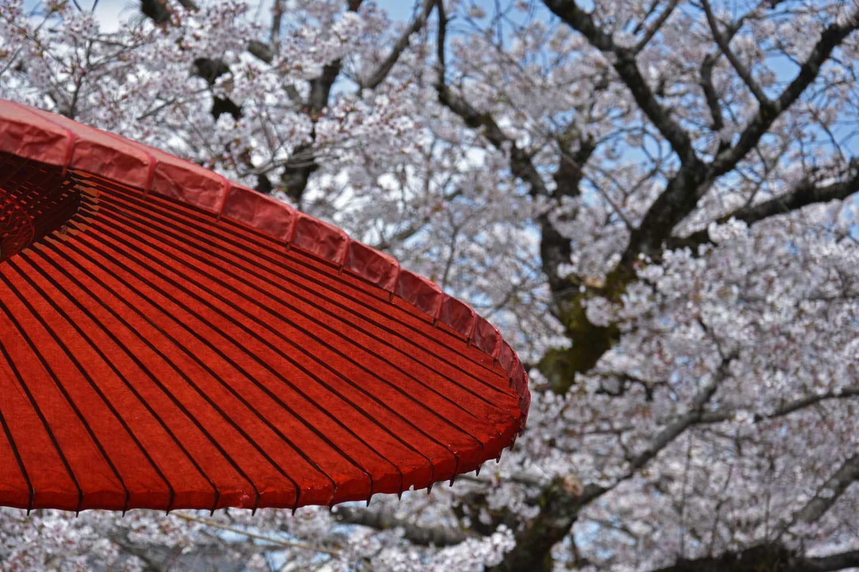 fukuoka-2019-yutoku-inari-parapluie