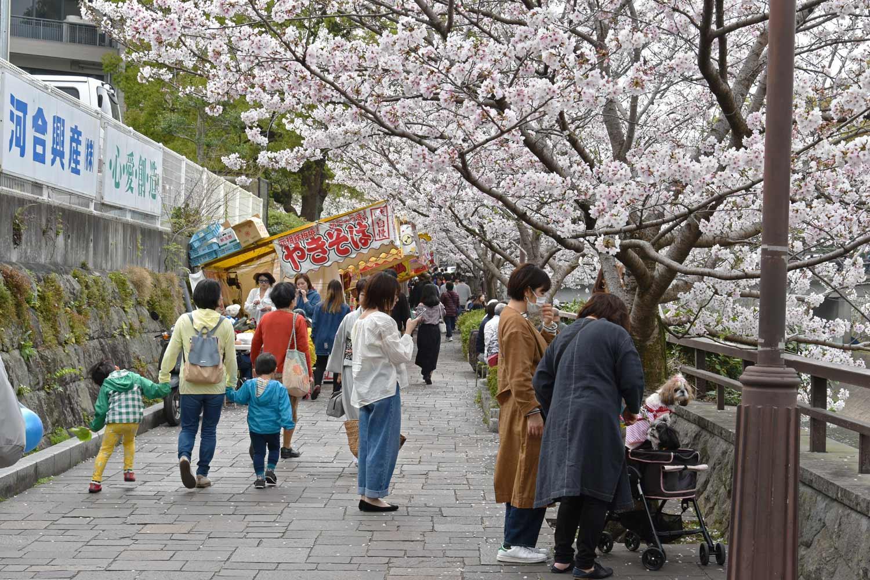 kumamoto-2019-chateau-allee-cerisiers