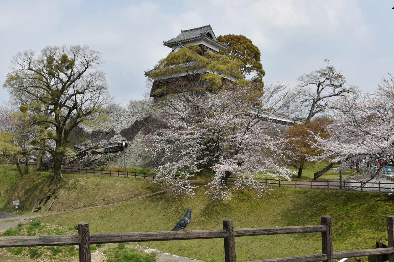 kumamoto-2019-chateau-hitsujijaru-yagura