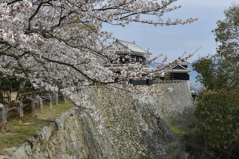 Matsuyama-2019-1-chateau-5