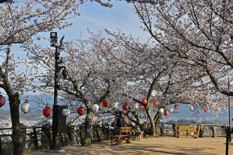 Matsuyama-2019-1-chateau-6