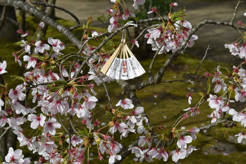2019-amanohashidate-temple-chion-ji-ema-eventail