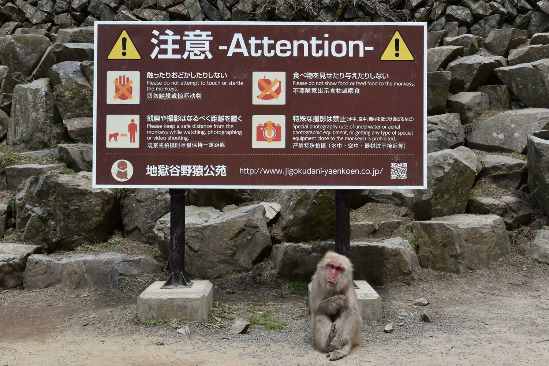 jigokudani-2019-jigokudani-snow-monkey-park-consignes