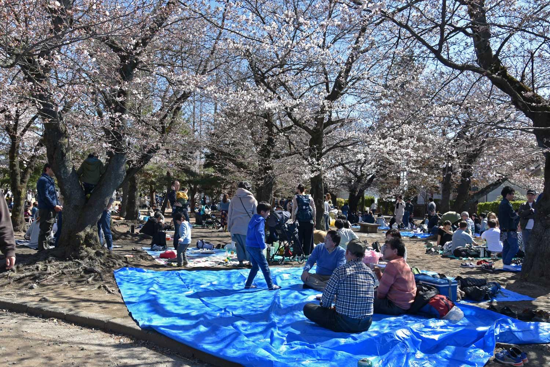 matsumoto-2019-chateau-hanami