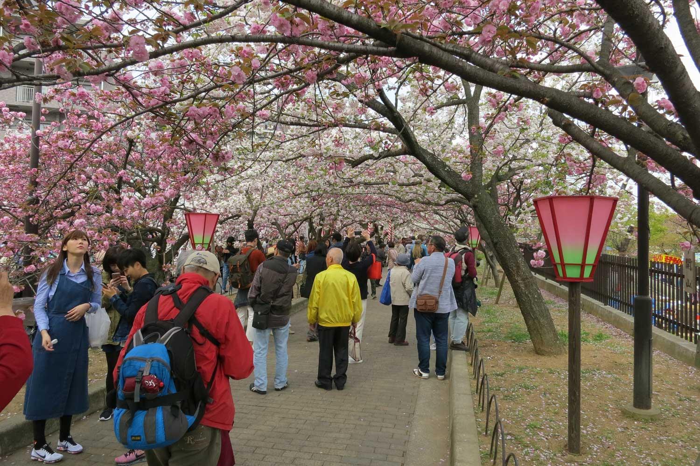 osaka-2016-cerisiers-mint-museum-1