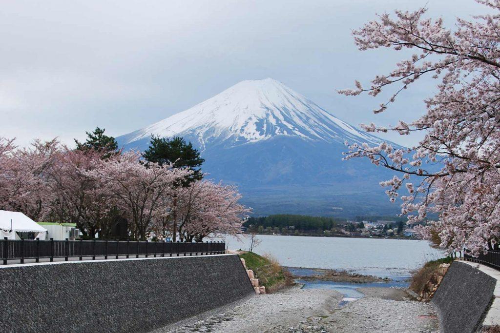 kawaguchiko-2016-lac-fuji-canal-sakura