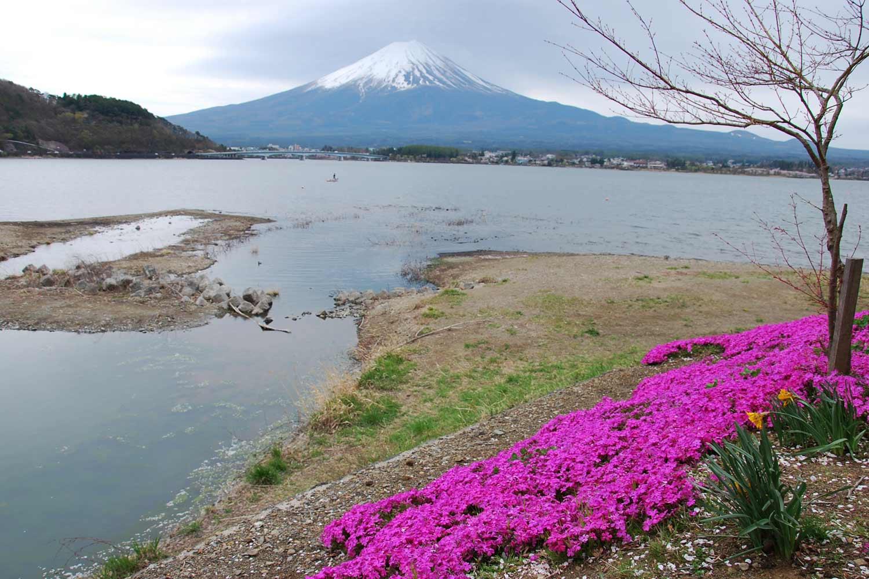 kawaguchiko-2016-lac-fuji-canal-shibazakura